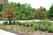 Harrison/Hillenbrand Hall Rain Garden
