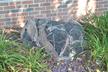 Amphibolite with Granitic Inclusions